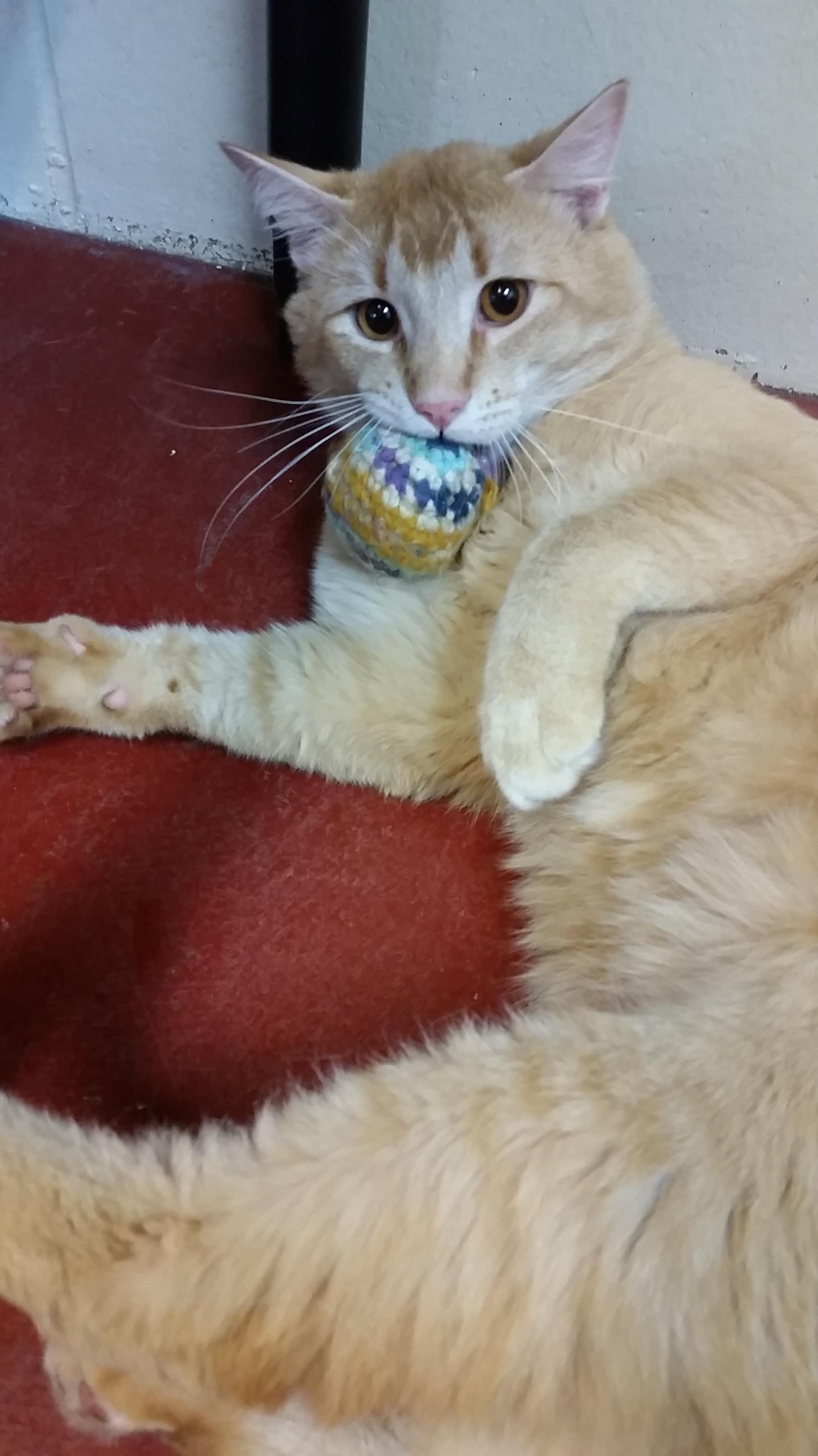 Spca Kamloops Cat Adoption