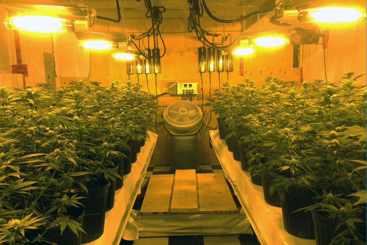 Spallumcheen Wants Pot Growers To Buzz Off The Farm Infonews