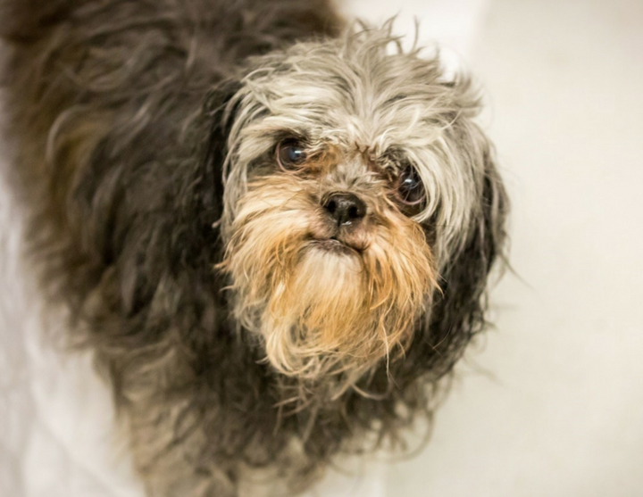 Nine little dogs at Kelowna SPCA in dire need of help - InfoNews