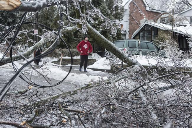 Ice_Storm_Damaged_Tree
